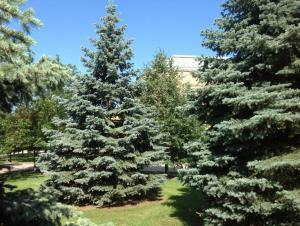 Maud Gordon Holmes Arboretum